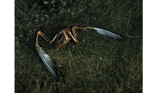 Big image tommy kwak bird